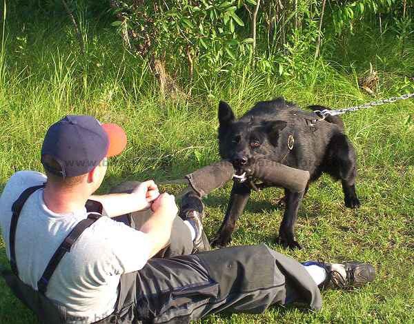 dog bite tug for dog training, schutzhund training,k9 dog training,play..