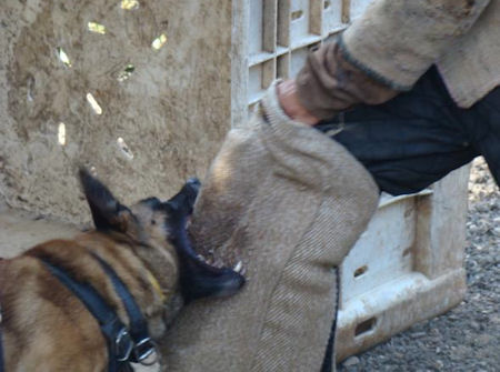 Dog protection leg sleeve with bite bar-Protection leg sleeve