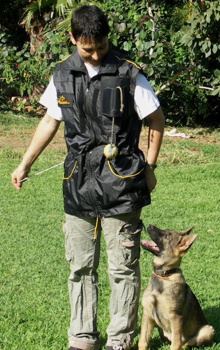 best Nylon Dog Training Vest With Smart Pocket Future